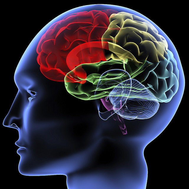 Otak Manusia dan Kecanggihan di Dalamnya