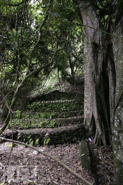 Pohon Trunyan