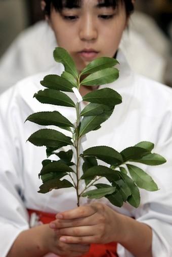 Pohon Sasaki