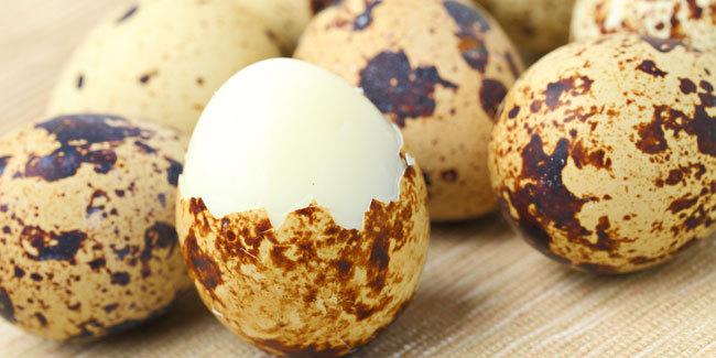 Telur Puyuh: Si Kecil yang Sakti