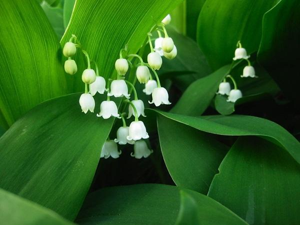 10 Bunga Eksotis Paling Mematikan di Dunia