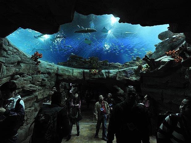 Aqua City, Taman Hiburan Terbesar di Hongkong