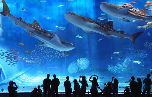 Okinawa Churaumi Aquarium, Jepang