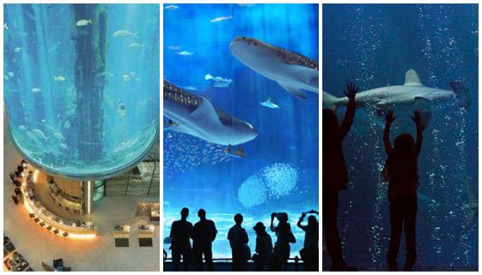 5 Akuarium Terbesar di Dunia