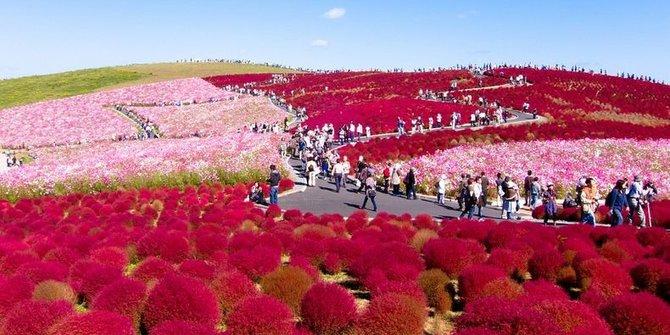 5 Taman Bunga Tercantik Di Dunia Jadiberita Com