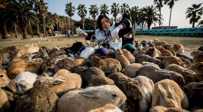 Pulau Okunoshima, Pulau yang Dihuni Ratusan Kelinci