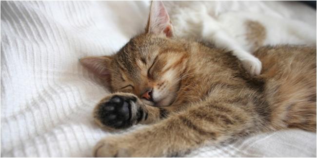 Mau Rileks? Ikuti Cara Tidur Kucing