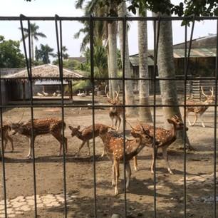 Kebun binatang mini di rumah orangtua Raline Shah