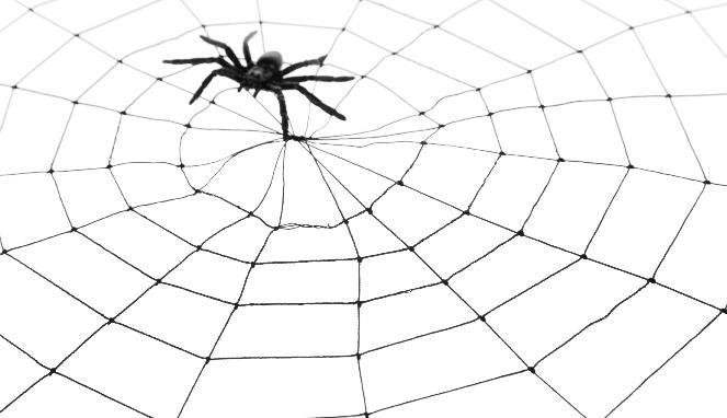 Digigit Laba-laba Misterius, Lengan Wanita Ini Alami Kelumpuhan
