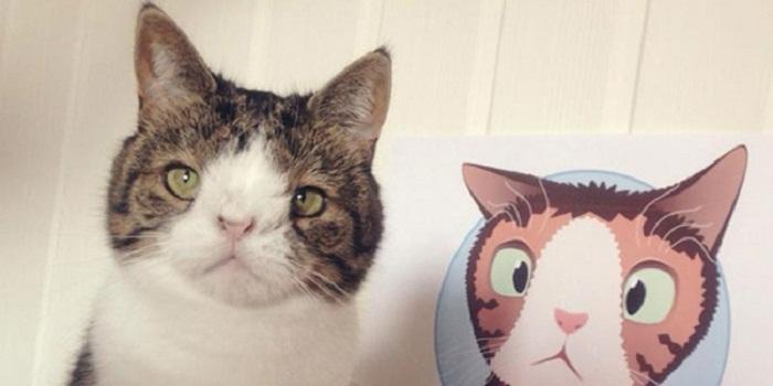 Perkenalkan, Monty si Kucing Berwajah Aneh