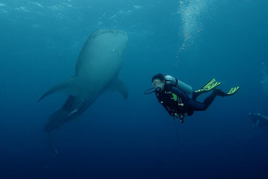 Indahnya Pemandangan Bawah Laut Taman Nasional Teluk Cenderawasih