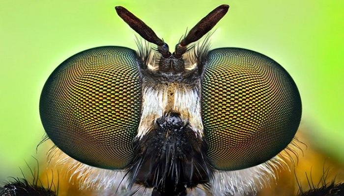 Serangga-serangga dengan Kemampuan Unik