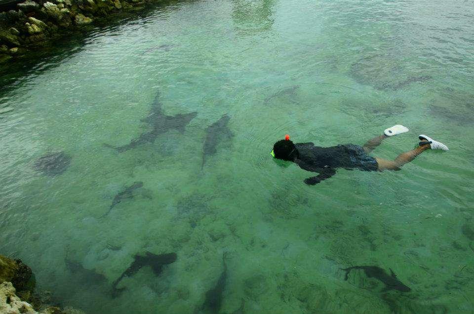 Pacu Keberanian dengan Berenang Bersama Hiu di Karimunjawa