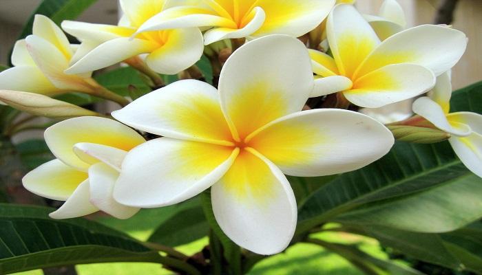 FOTO: Bunga dengan Bentuk Teraneh di Dunia
