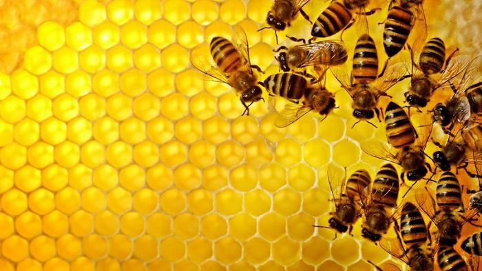 Sikap Positif yang Bisa Diambil dari Lebah