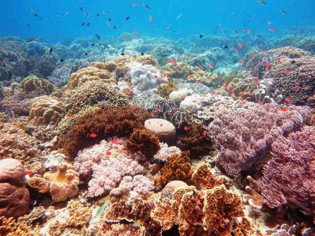 5 Wisata Taman Laut Terindah di Indonesia