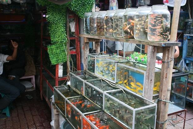 Kisah Pemuda yang Sukses Jadi Pengusaha Ikan Hias