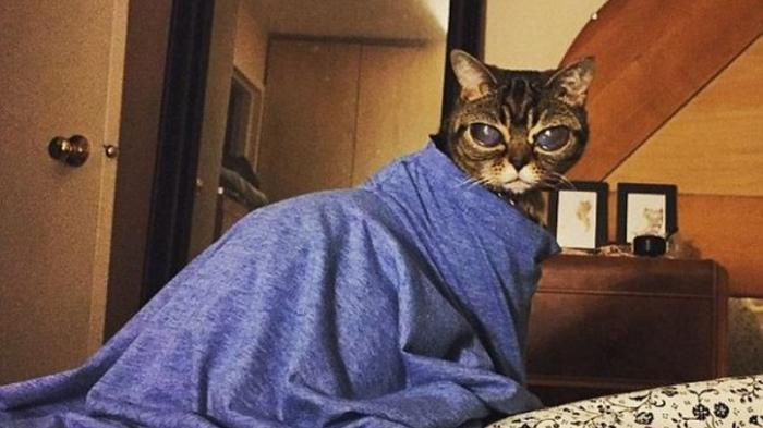 Wow, Ada Kucing Bermata Alien