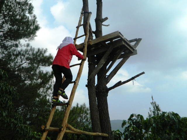 Menaiki gardu pohon di puncak becici
