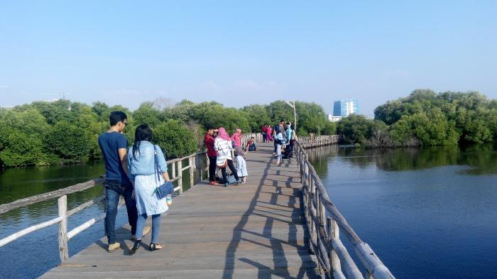 Taman Mangrove (jadiberita.com)