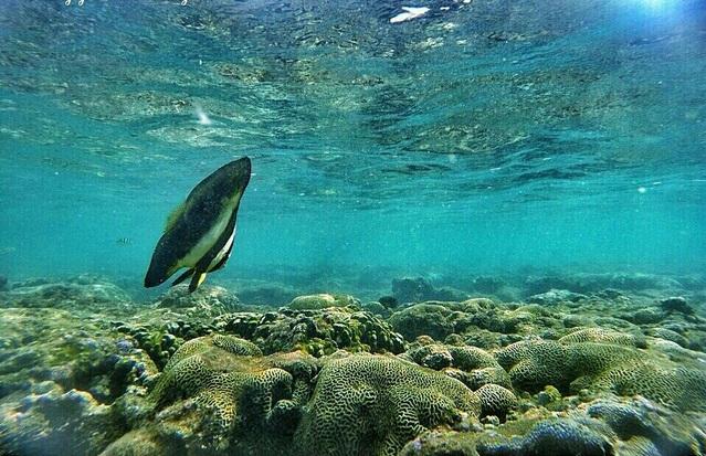 Terumbu karang Pantai Nglambor