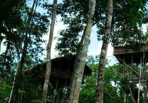Rumah pohon (Kaskus)