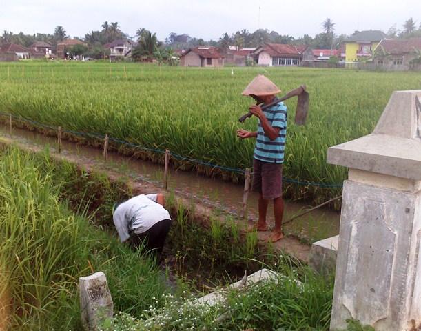 Peran pemerintah mensejahterakan petani