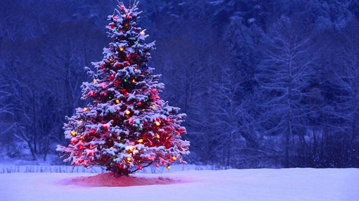 Kenapa Natal Identik dengan Pohon Cemara?