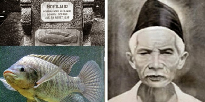 Penemu Ikan Mujair Ternyata Orang Indonesia Jadiberita Com