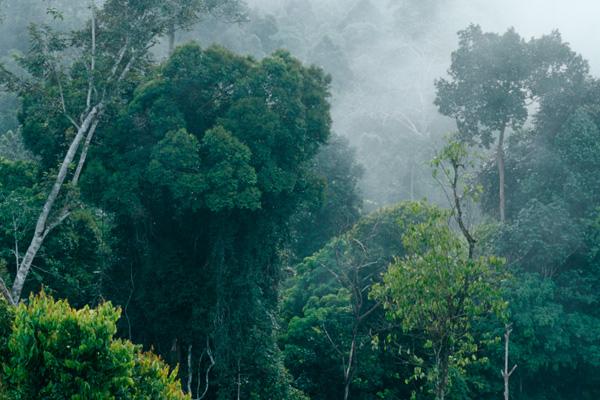 Hutan Indonesia (Viruspintar)