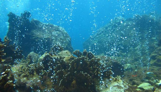 Bawah laut (Viva)