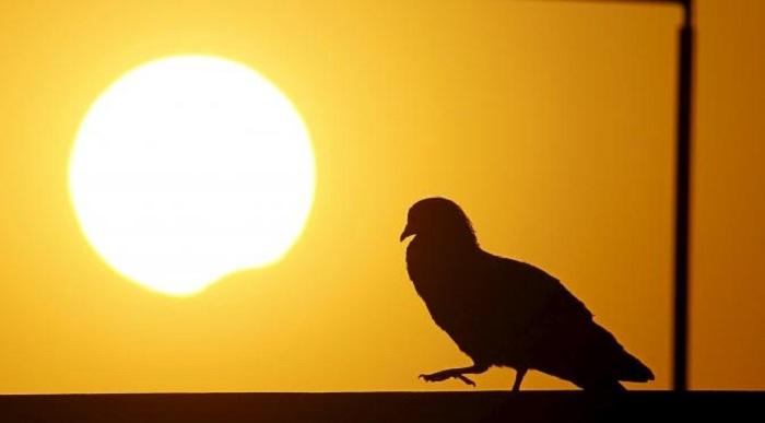 Hewan-hewan yang Perilakunya Berubah Saat Gerhana Matahari