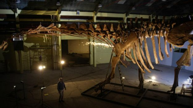 Tulang Argentinosaurus (BBC)