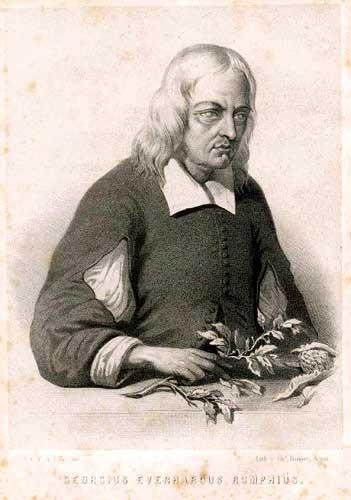 Georg Eberhard Rumphius (Meemelink)