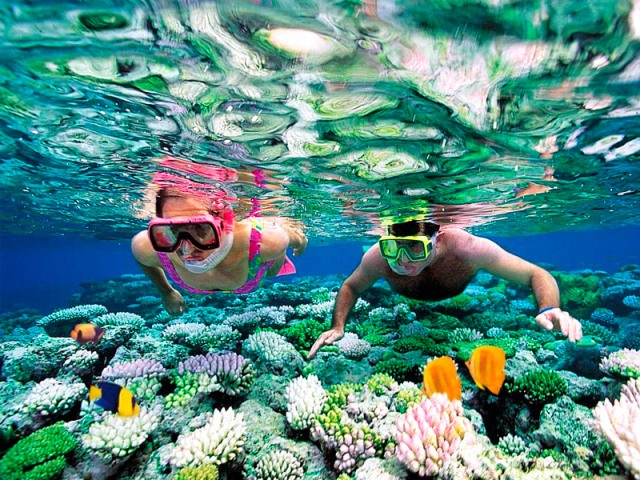 5 Hewan Laut Berbahaya Ini Wajib Kamu Waspadai Saat Snorkeling