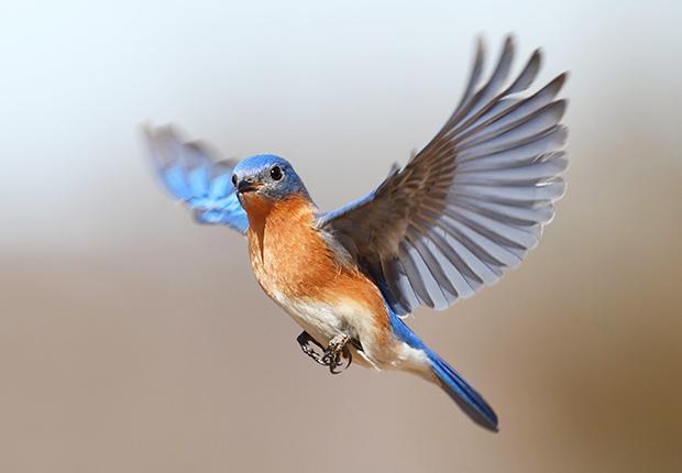 Burung (Tahukahkamu)