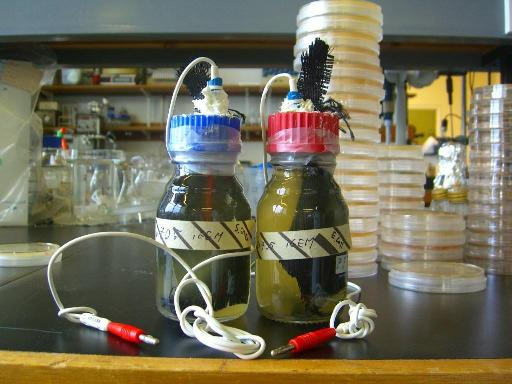 Microbial Fuel Cells (Science Daily)