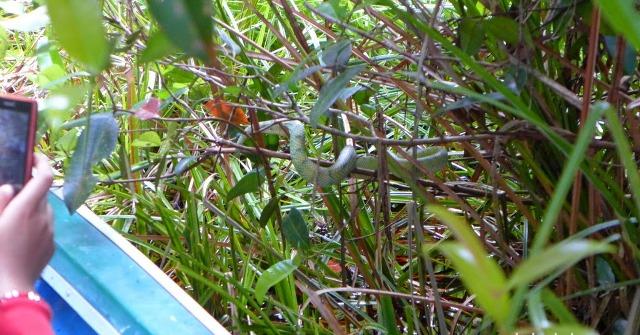 Ular yang muncul di dekat speedboat (www.backpackerborneo.com)