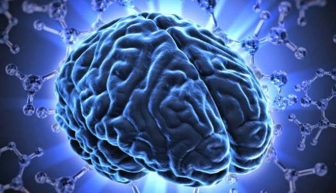Ilustrasi otak (Viva)