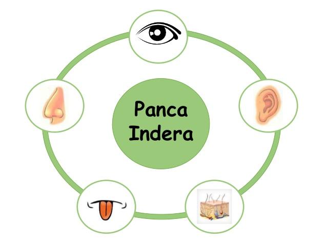 Panca indera (Slideshare)