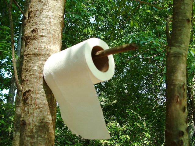 Tisu terbuat dari kayu pohon (www.greenyourdecor.com)