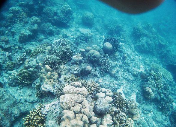 Snorkeling di Pulau Pari (instagram.com)