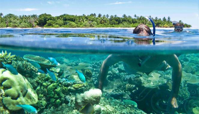 Snorkeling di Pulau Sepa (ulinulin.com)