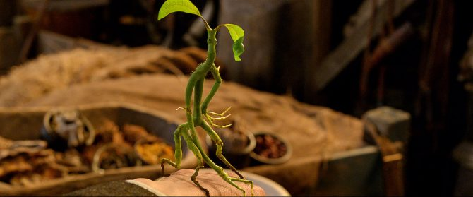 Bowtruckle (Warner Bros)
