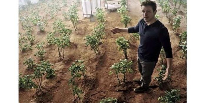 Film The Martian Jadi Nyata, NASA Sukses Bikin Kebun di Mars