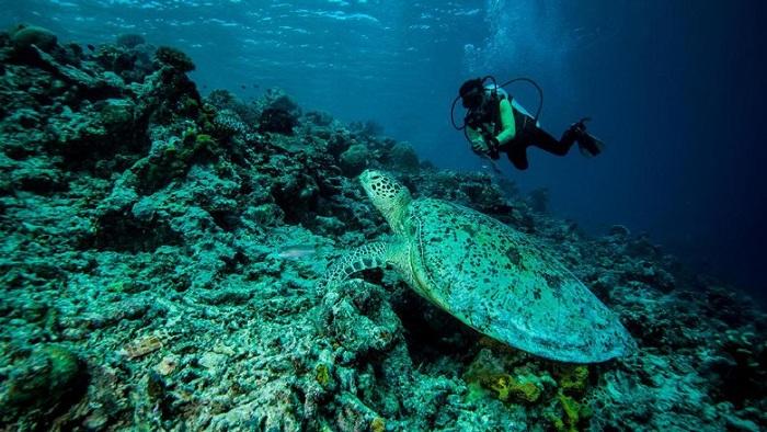 Bangga, Indonesia Dominasi Daftar Spot Diving Terbaik Se-Asia