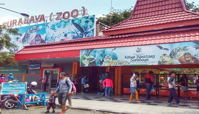 Bersafari di Kebun Binatang Surabaya yang Terbesar di Asia Tenggara