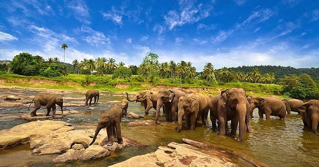 Keren! Ini 5 Taman Paling Eksotis yang Ada di Indonesia
