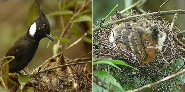 Wajib Dilindungi, Ini 5 Burung Asli Indonesia yang Terancam Punah