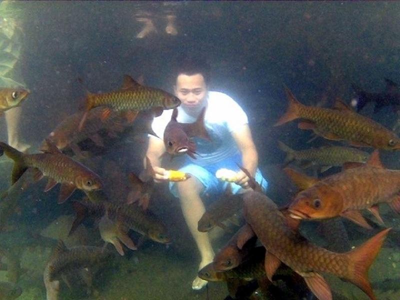 Merasakan Sensasi Berenang dengan Ikan Besar di Banyu Biru Pasuruan